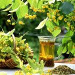 Липовый цвет – аромат и здоровье