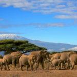 Животный_мир-150x150 На что посмотреть во время отдыха в Танзании